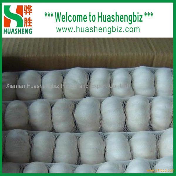 The new crop fresh garlic