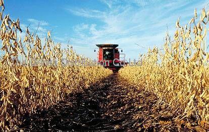 Soybean Grade 2 (Non GMO)