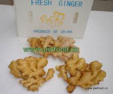 Fresh Ginger in plastic box