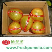 china pomelo,citrus fruit,grape fruit,pomelo,fruit