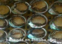 frozen taiwan abalone