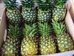 Philnova Pineapple Fruits