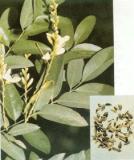 Rutin   NF11 ( vitamin P1)
