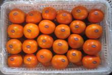 sweet chinese navel orange