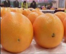 navel orange on promotion