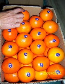 big navel orange