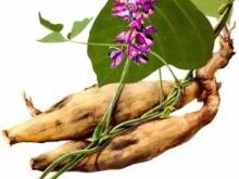 Kudzu Root Extract 40% Isoflavone