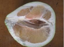 Honey pomelo12