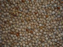 Toor (pigeon peas)