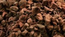 Nibs of cocoa