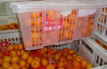 Nanfeng orange25