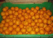 Nanfeng orange36