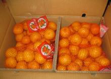 Nanfeng orange37
