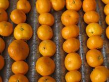Nanfeng orange45