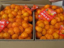 Nanfeng orange48