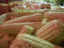 white whole sweet maize