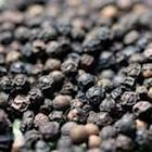Black pepper for sale at very good prices