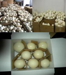 HIGH QUALITY FERTILE OSTRICH EGGS FOR SALE AND OTHER OSTRICH PRODUCTS!!!