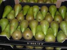 Fresh Ya Pear high quality 2011