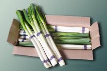 Fresh Scallion(Naganegi)
