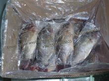 China Frozen Black Tilapia Fish Gutted Gilled Scaled (Oreochromis Niloticus, Oreochromis Mossambicus