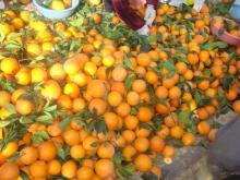Navel orange03
