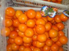 Navel orange04