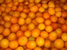 Navel orange07