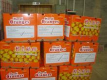 Navel orange11