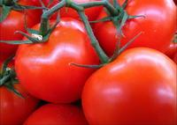 lycopene ,  tomato   extract  5%,10%