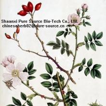 Rose hip extract p.e.