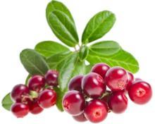 Lingonberries (Vaccinium Vitis Idea), IQF frozen