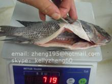tilapia gutted and scaled