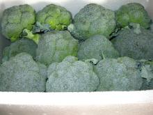 Fresh broccoli001