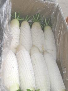 Chinese fresh radish003