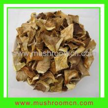 Oyster   Mushroom   Pleurotus  Ostreatus