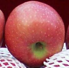2020 Chinese Fresh Fuji Apple
