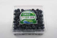 fresh cultivate blueberry