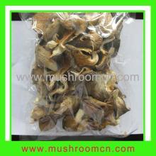 Pleurotus Ostreatus, English Name:Oyster Mushroom