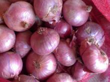 fresh   new   onion