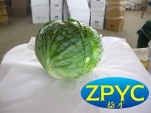 Beijing cabbages