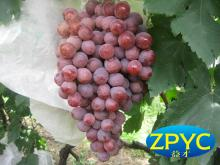 Yunan red globe grape