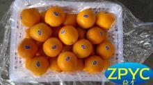 Ganzhou navel orange