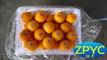 Top quality chinese navel orange