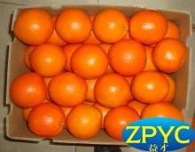 sweet navel oranges