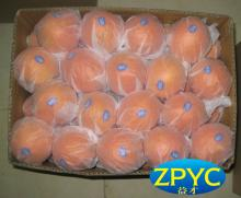 fresh chinese navel oranges