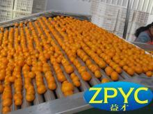 Nanfeng baby mandarin