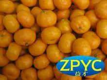 Chinese baby nanfeng mandarin