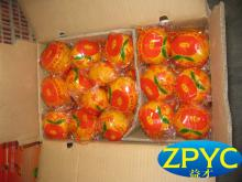 Chinese pokam mandarin orange