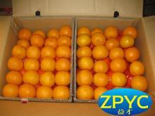 2015 Chinese fresh mandarin orange